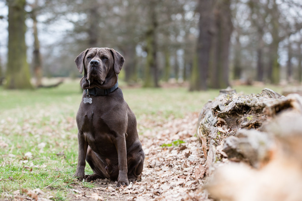 Richmond and Twickenham Dog Photographer_Twickenham Pet Photography