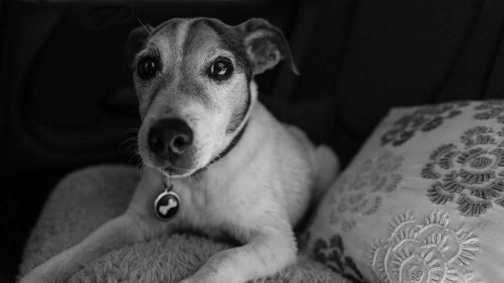 Richmond upon Thames and Surrey Dog Photographer