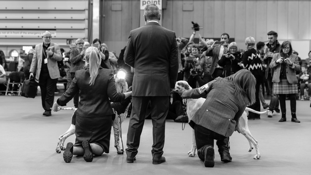 Kennel Club Crufts Photography