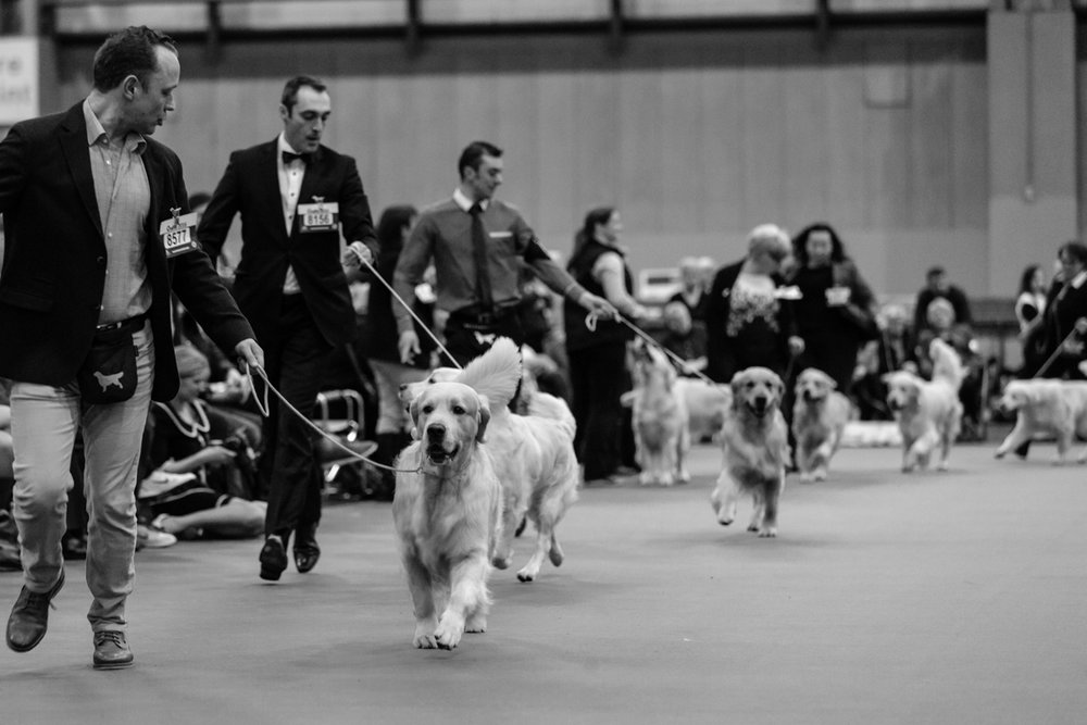 Crufts 2018 photography