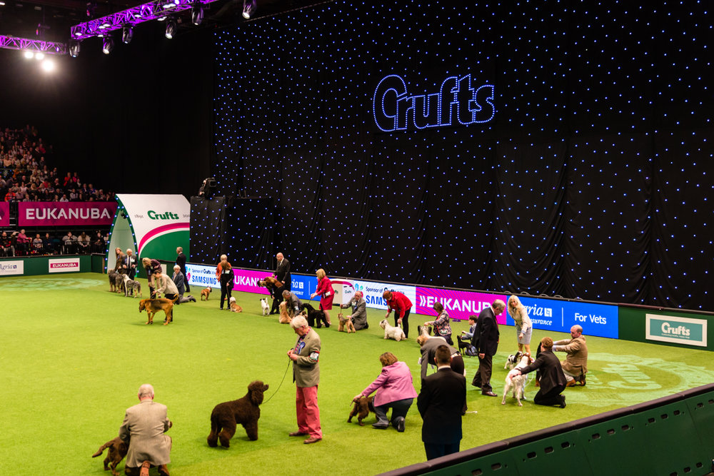 Crufts Kennel Club photography