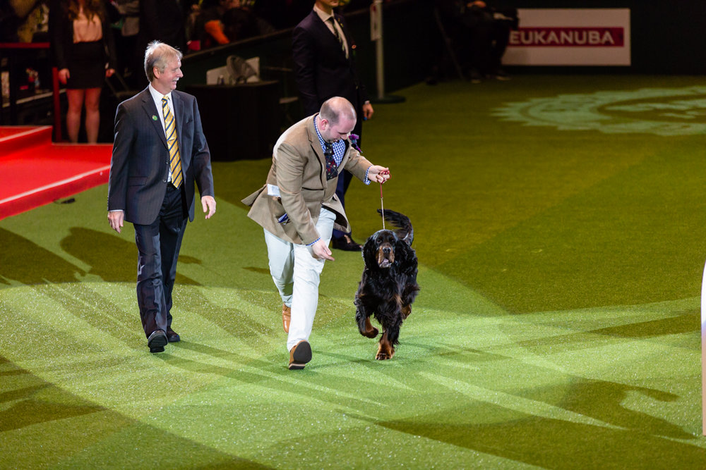 Kennel club Crufts 2018 photos