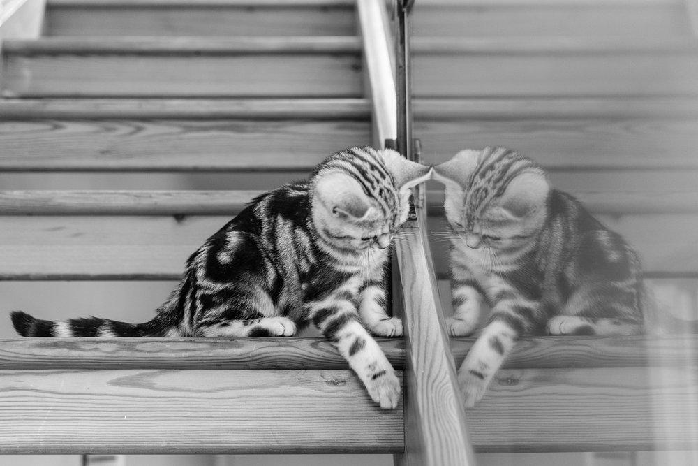 Richmond-upon-Thames Pet Photographer