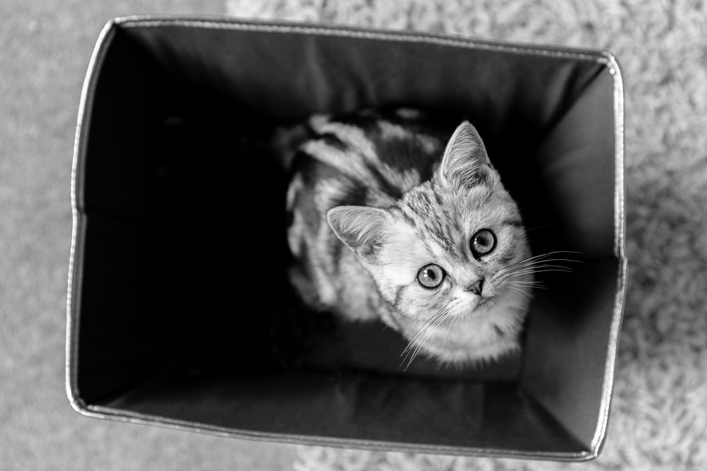 Cat photographer London and Surrey