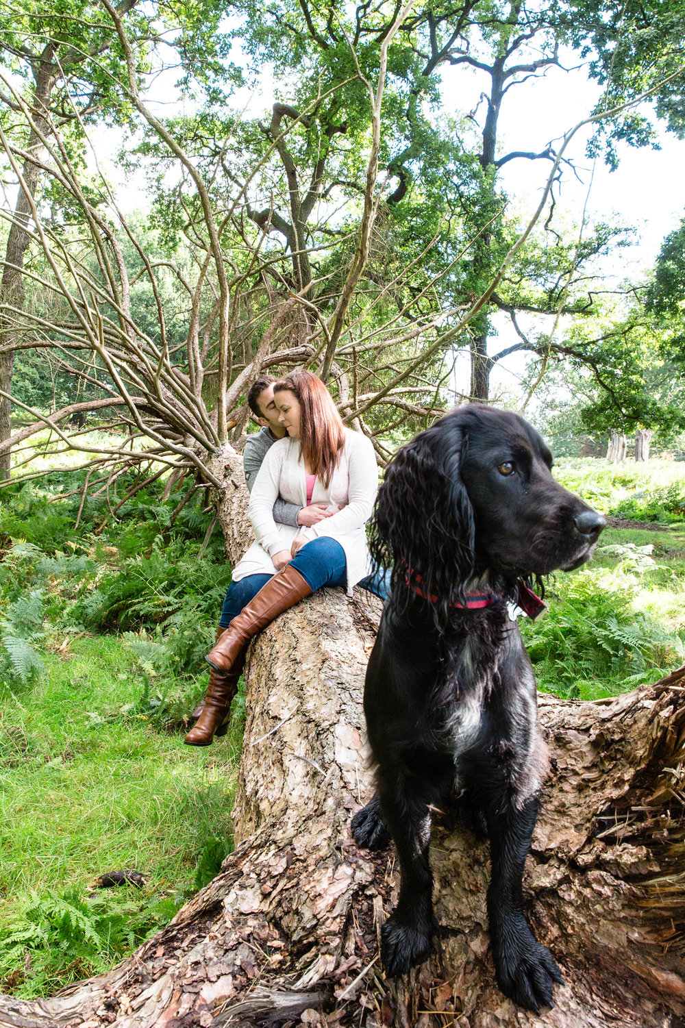 Location pet photography Richmond Park