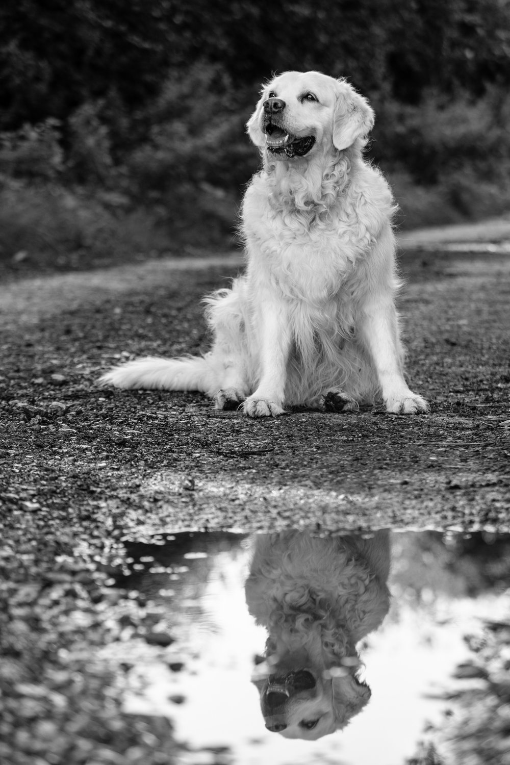 Professional dog photographer Surrey