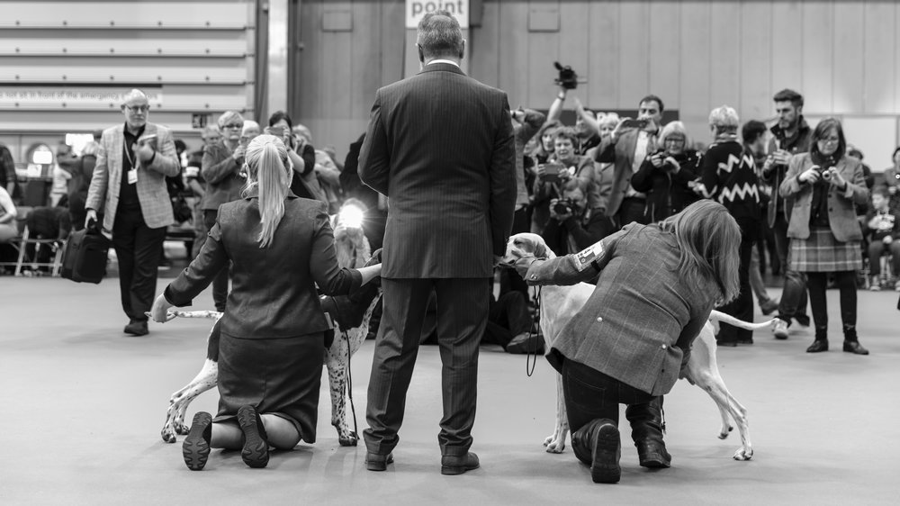 Crufts Professional Photographer