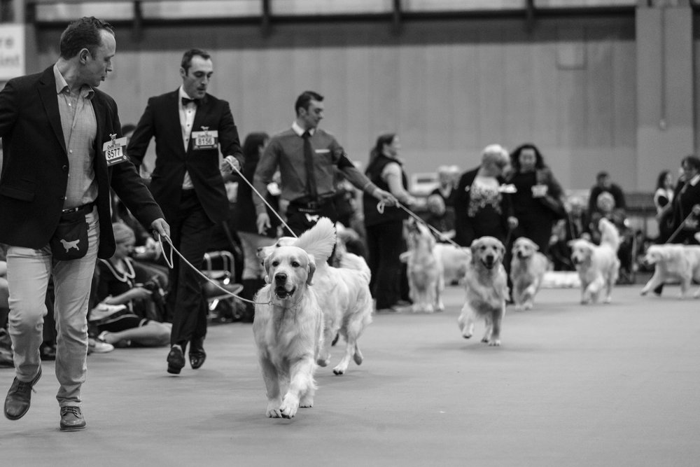 Crufts Dog Show Photography