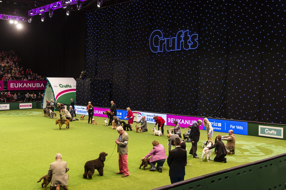 Crufts Professional Photography