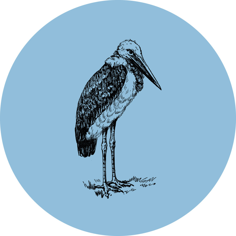 Marmont, the Maribou Stork