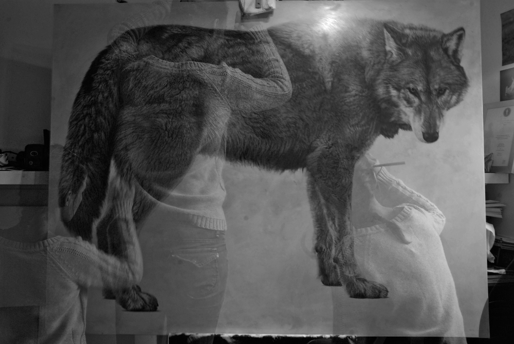Vicky White | Grey Wolf II | Pencil on panel