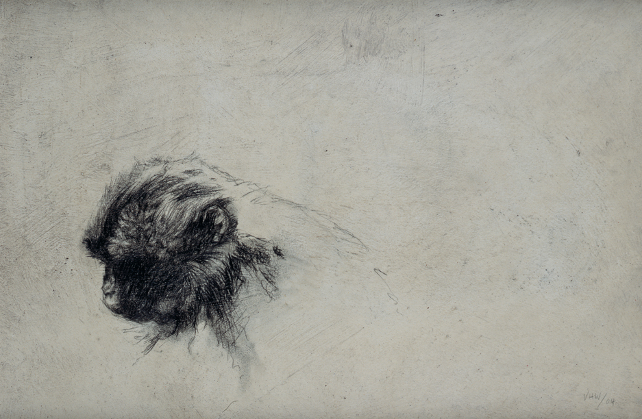 Vicky White | Gelada I | Pencil on board