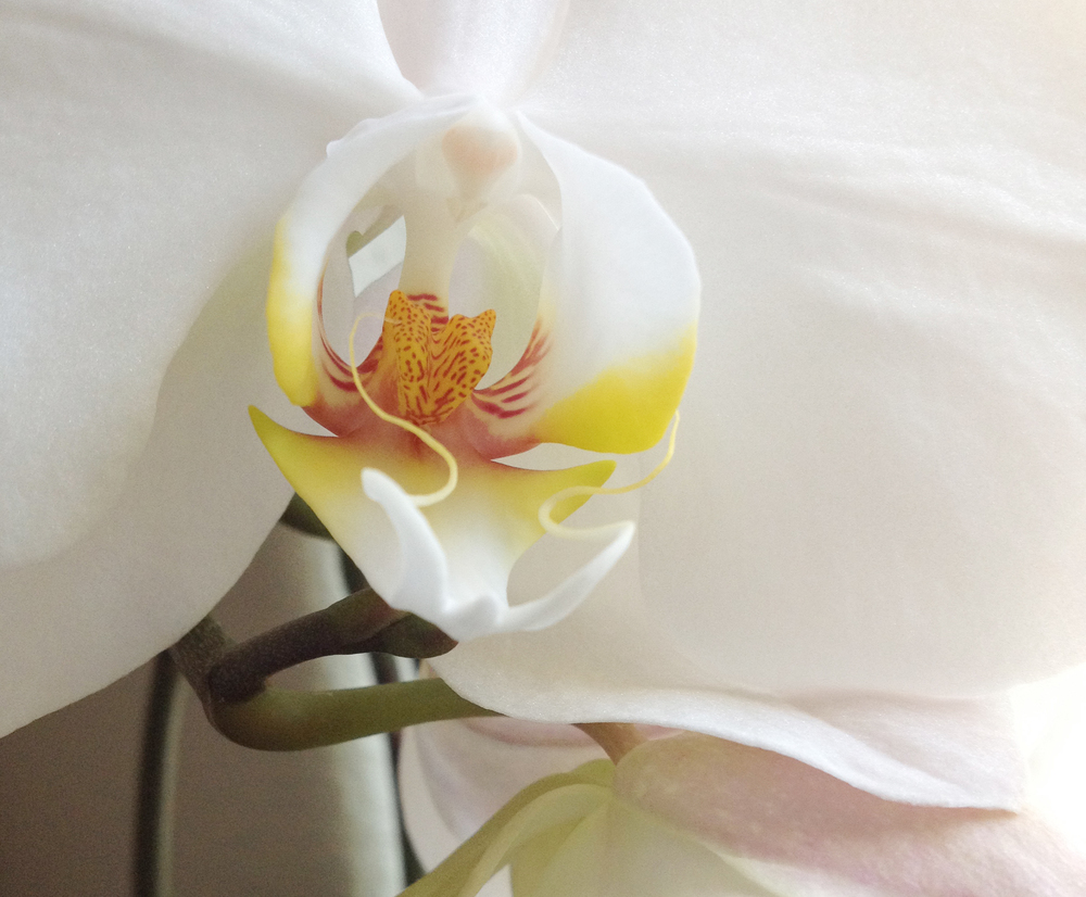 photo orchid.jpg