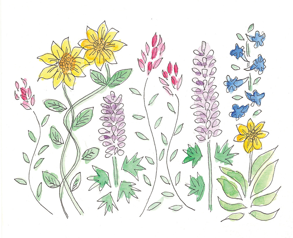 more wildflowers.jpg