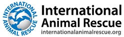 Click the banner above to visit the International Animal Rescue website for more information and how you can donate to the cause. Please consider a donation to this organization if you can.