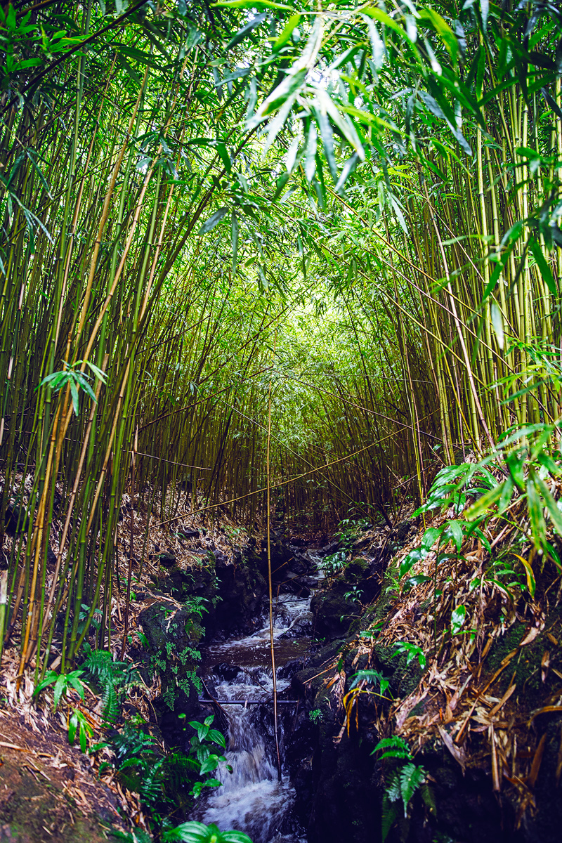 Bamboo jungle in Haiku