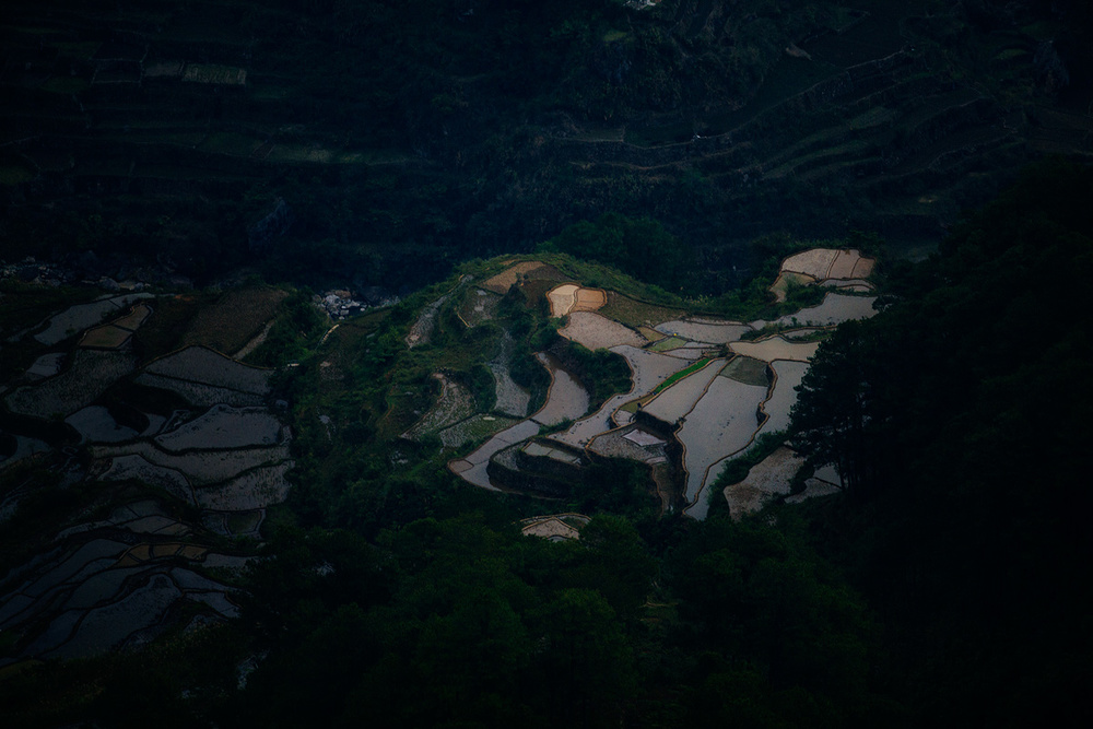 Rice terraces during sunrise
