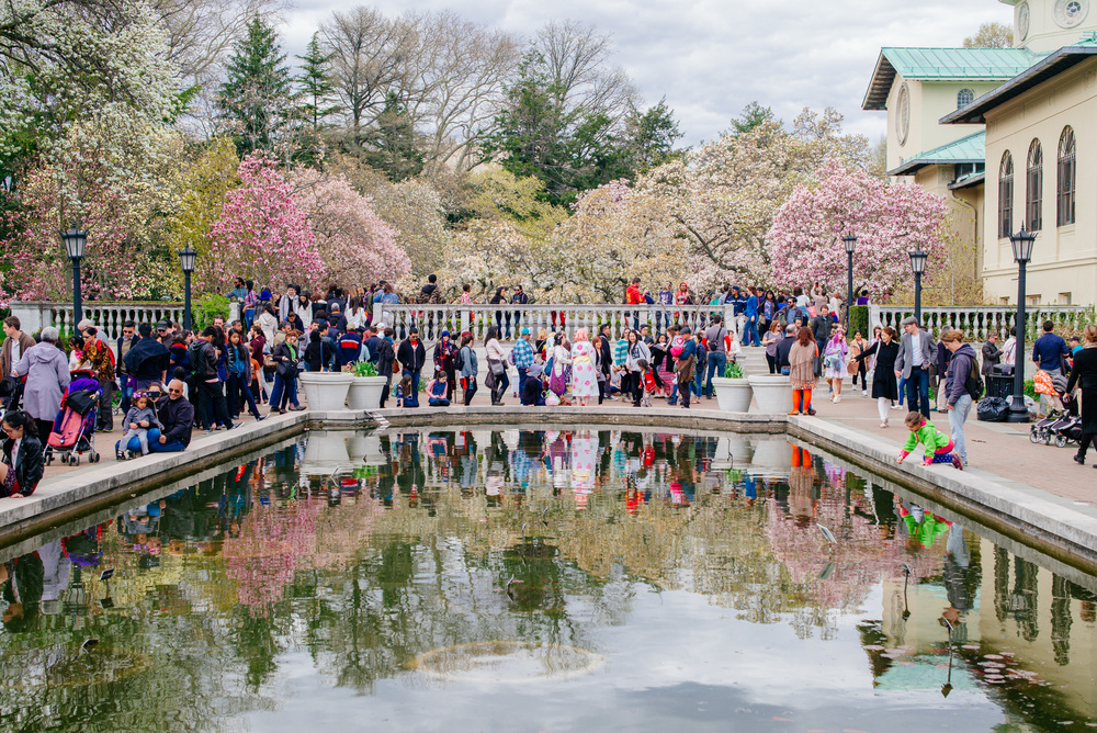 Sakura Matsuri at Brooklyn Botanical Garden
