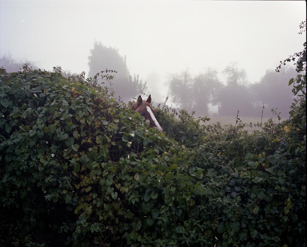 kingthorn 051.jpg
