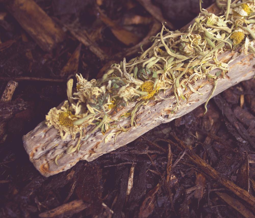 crysanthemum and honeysuckle product image.jpg