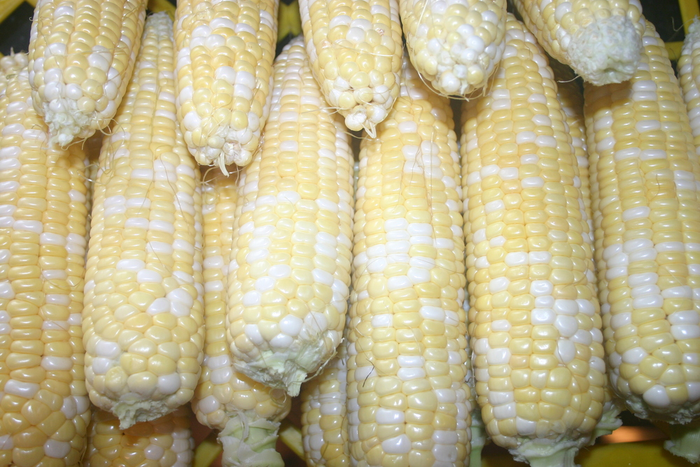 Step 1: Shucked corn, ready to boil