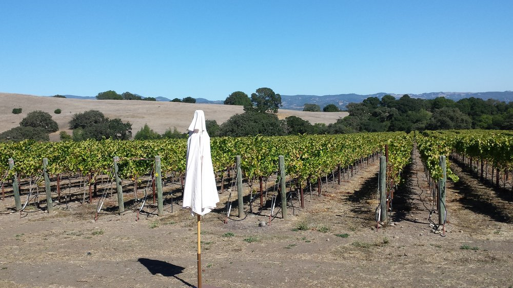 Any guesses the name of this famous vineyard in Sonoma Valley? Here's your hint: We are pouring chardonnay from there this Saturday!