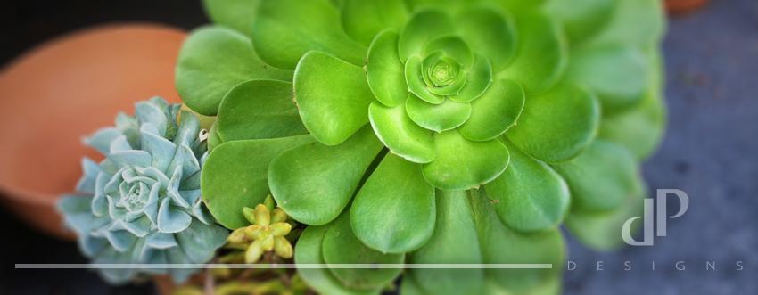 Succulent Coverpic.jpg