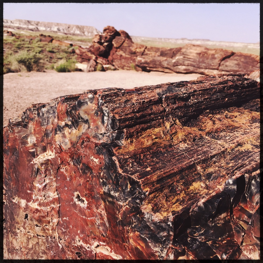 Giant Logs of the Rainbow Forest in the Petrified Forest National Park in east AZ.