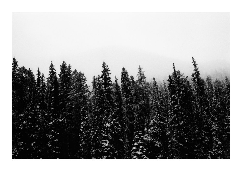Diamondtimes Kootenay National Park Illford.jpg