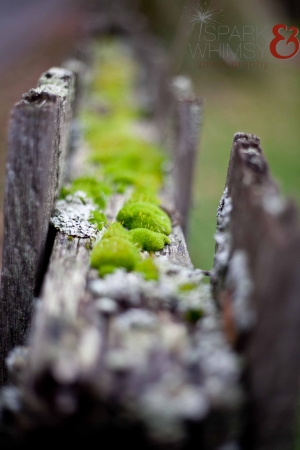 I LOVE moss & lichen. I think it's pretty much one of the coolest things on earth. It turns things back to soil. How amazing is that?