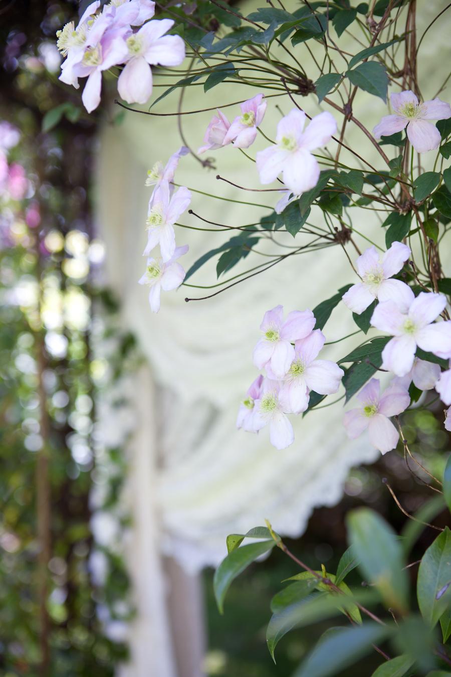 Arbour flowers at Villa Marco Polo Inn