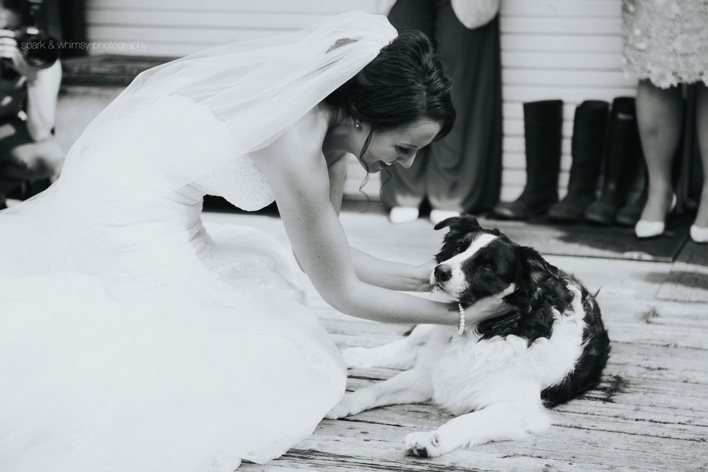 candid photo of bride with dog | Wedding Photographer Victoria BC