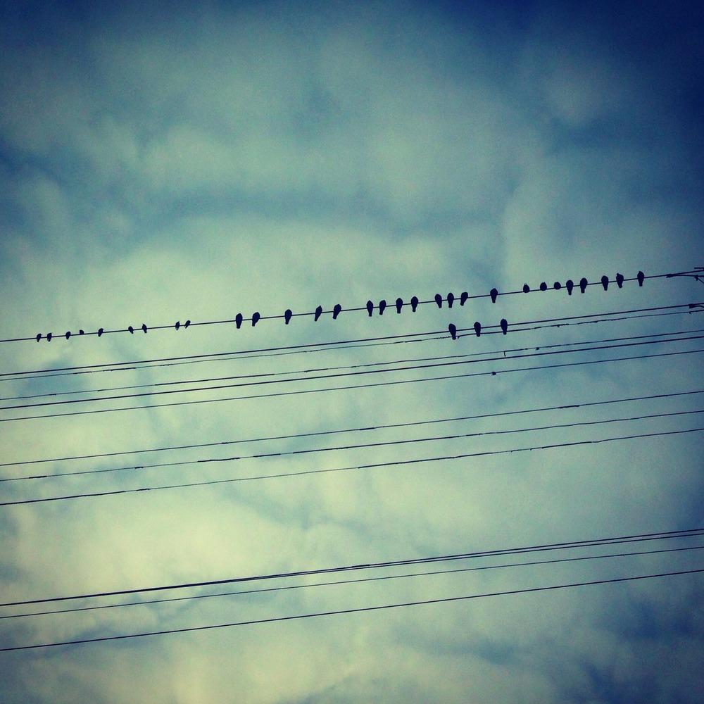 Bird Series.