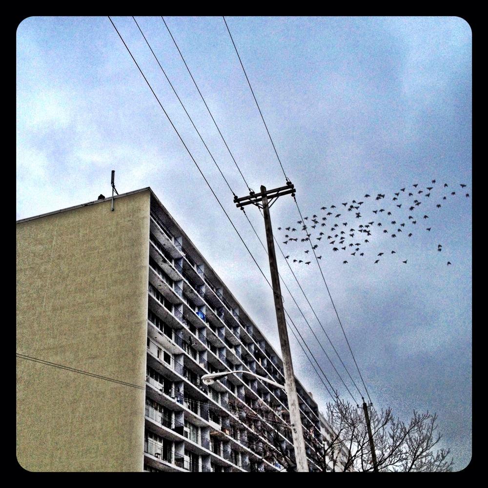 Urban Murmuration.