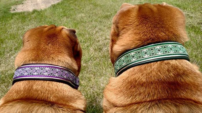 Ever and Zephyr looking stylish with Double Leather collars.  Purple Diamonds for Ever and Green Diamonds for Zephyr