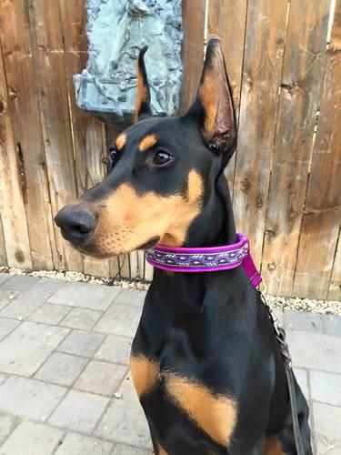 Lola from Boise