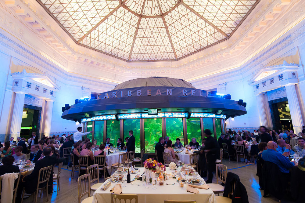 Wedding reception at the Chicago Shedd Aquarium.