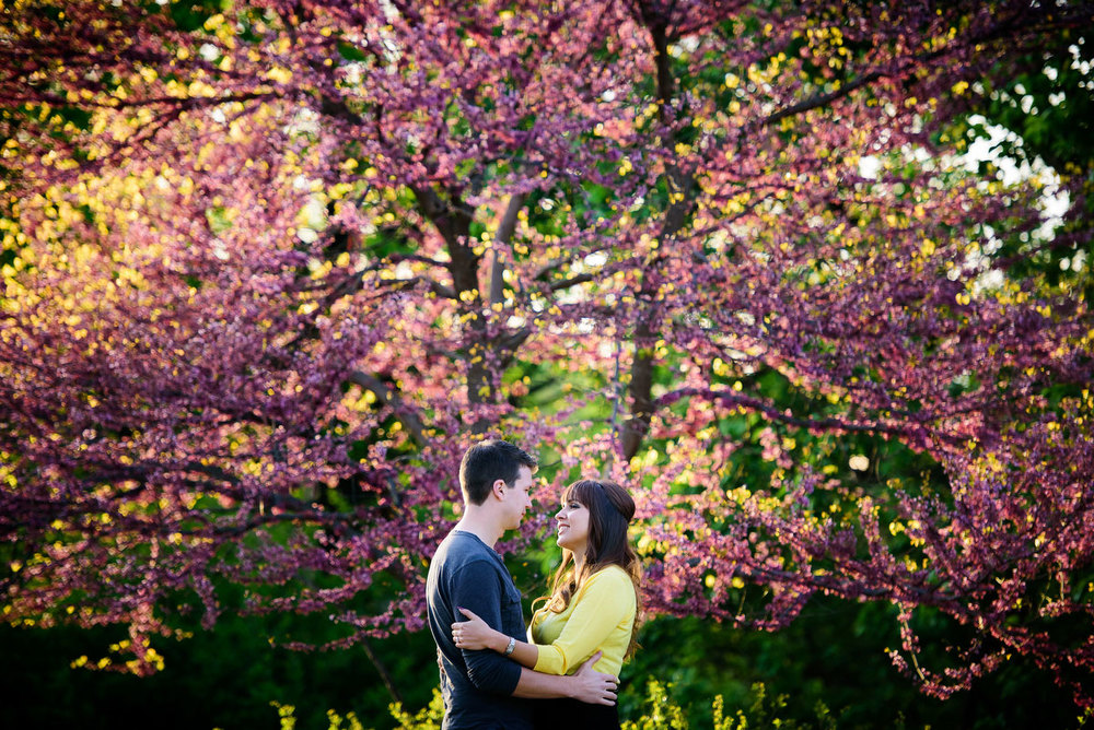 A tree blooms in bright purple during a couple's engagement session at the Morton Arboretum.