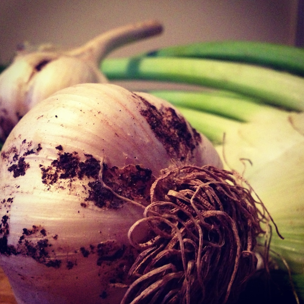 Freshly dug garlic and farmer's market fennel