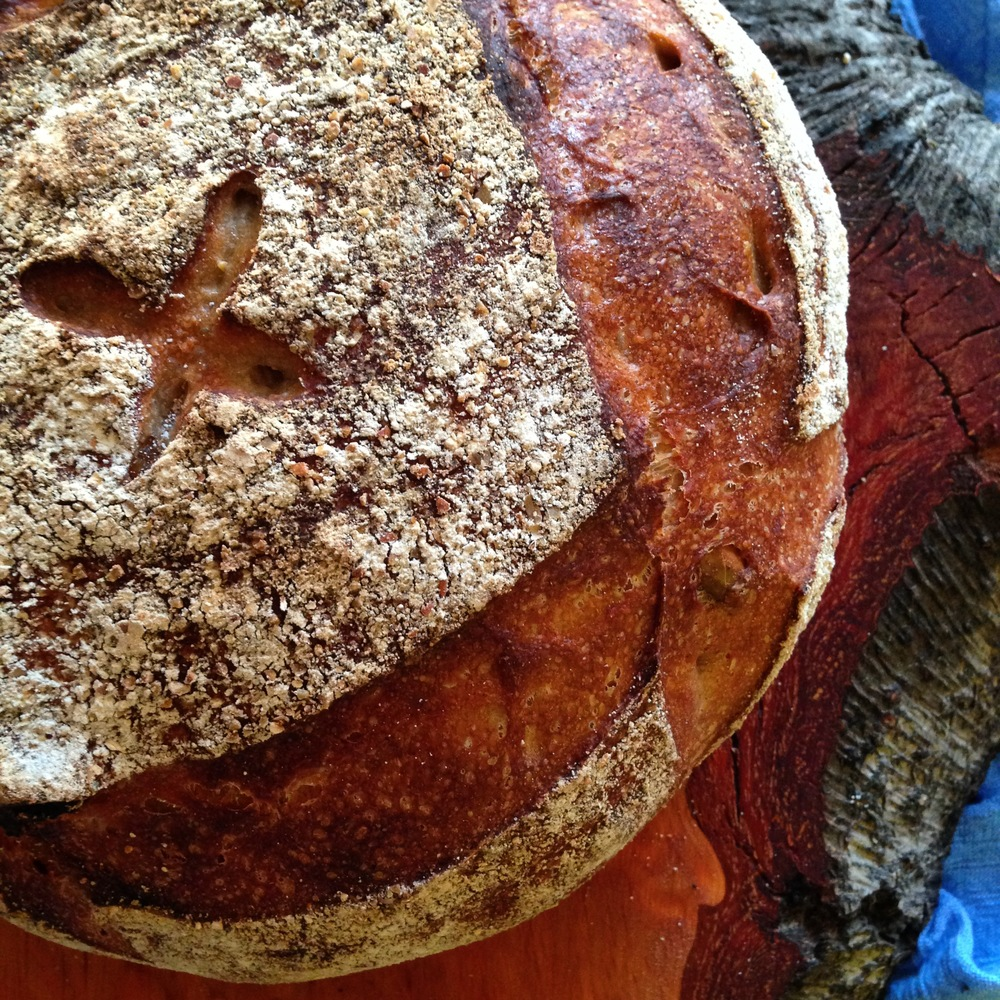 A loaf of Khorasan Apricot Levain on the beautiful wood of the Alder tree.