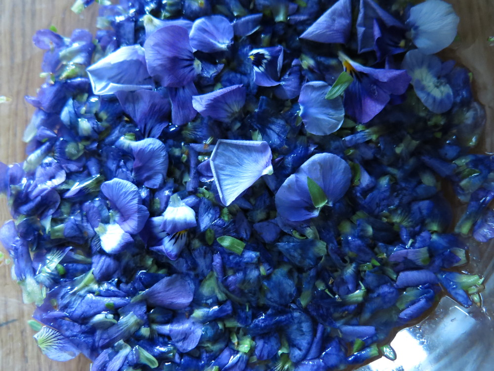 Violet blossoms soaking in a bath of hot water.