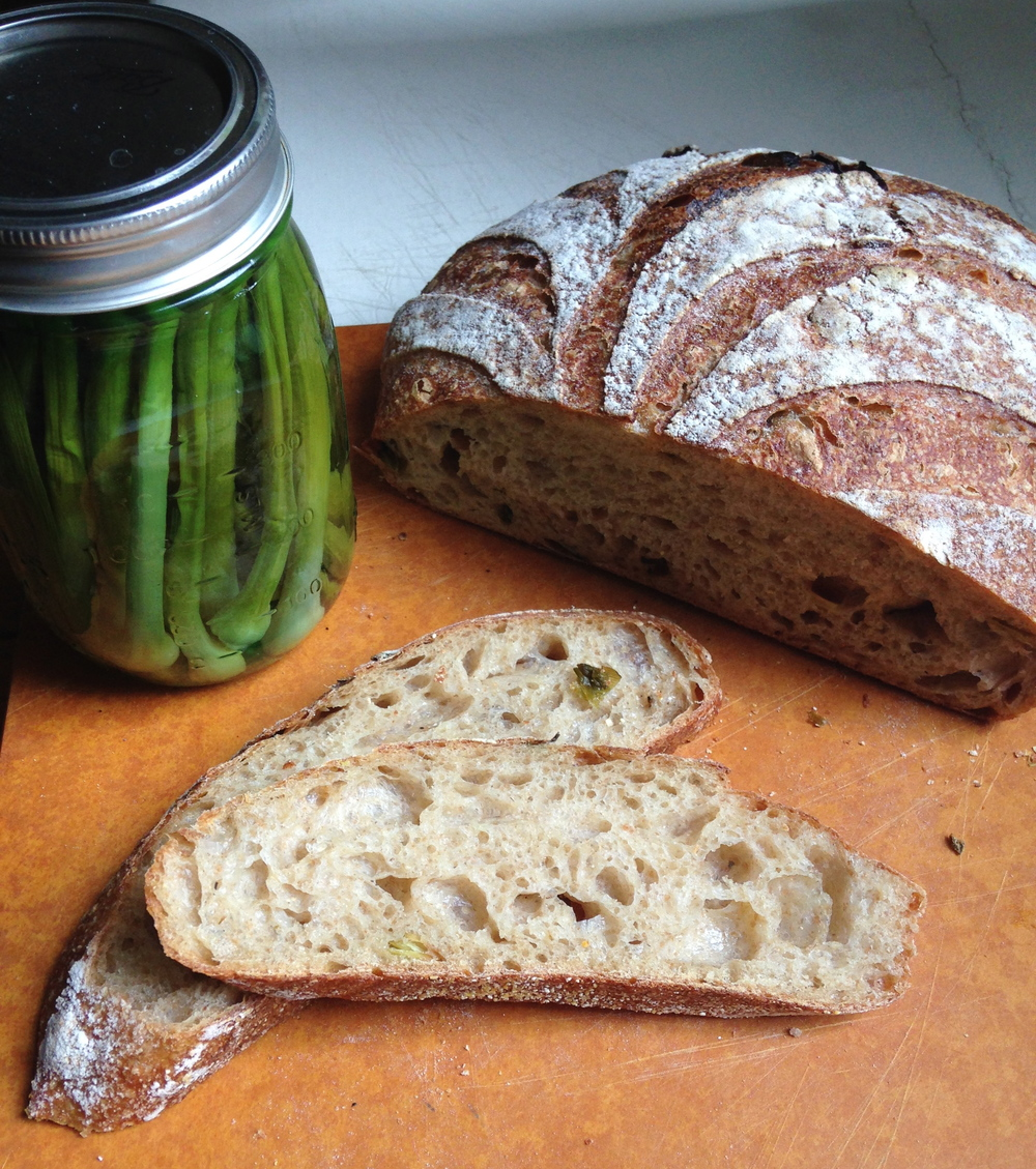 Allium vineale is a delicious weed perfect for pickling or incorporating into breads.