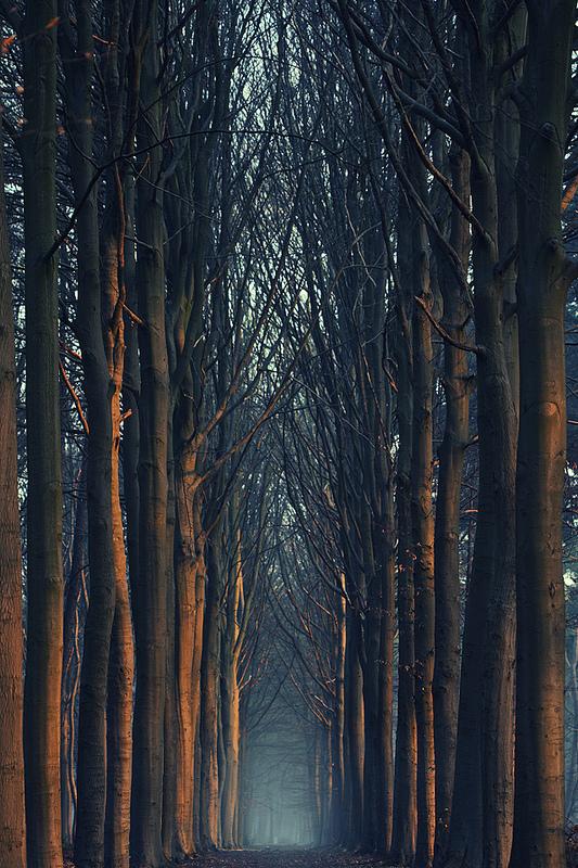vurtual :      A perfect 6 AM walk  (by  Mathijs Delva )