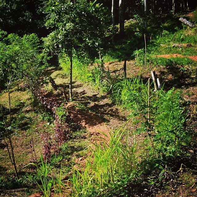Alley cropping and terraces are employed to dramatically reduce erosion and improve tropical soils.