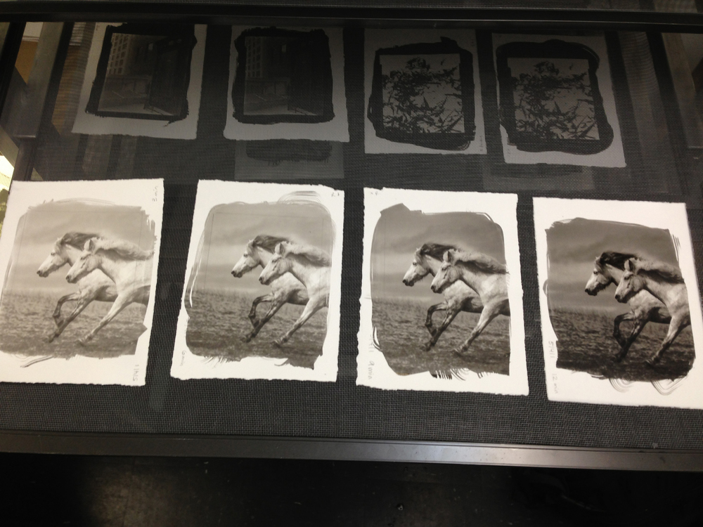 Platinum Prints drying