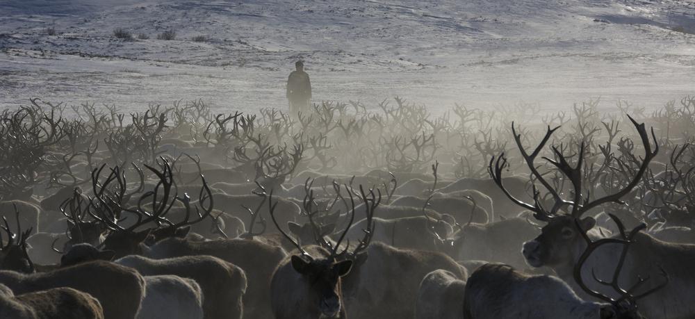 Kamchatka Rennes hiver.jpg