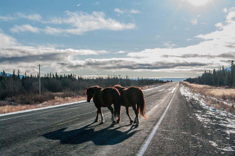 Linda Bortoletto_Alaska-2.jpg