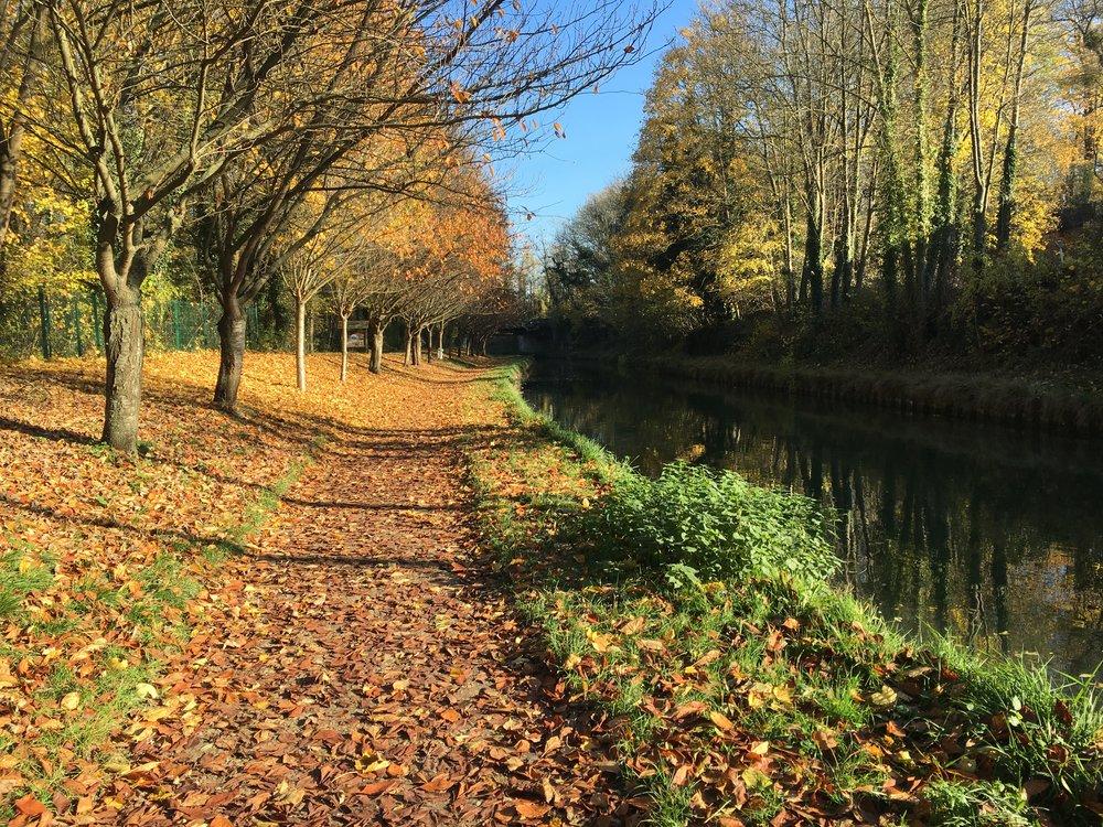 Les magnifiques nuances de l'automne