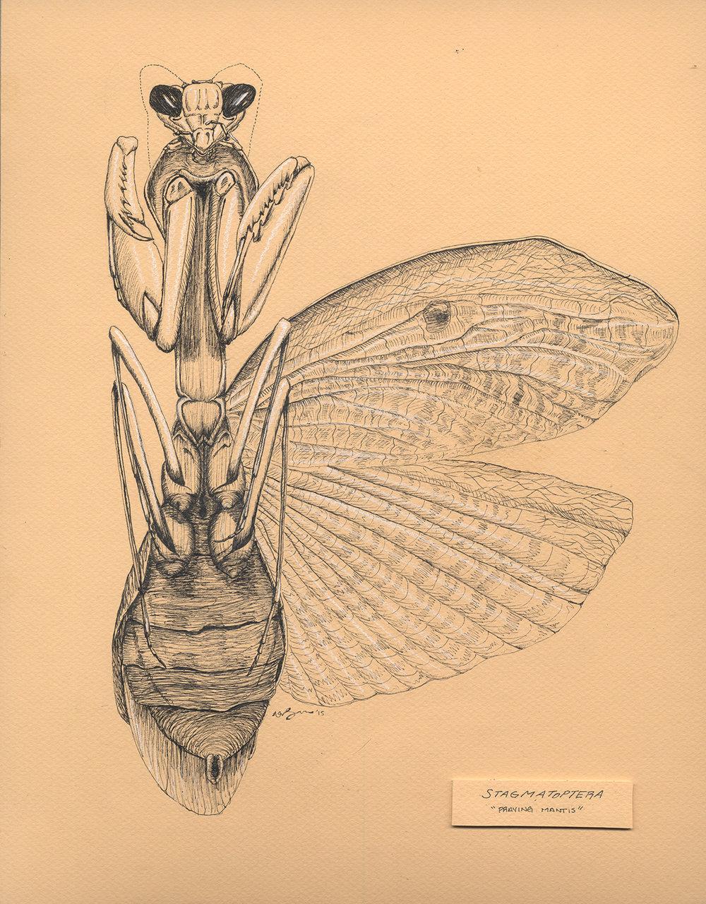 Scientific Visualizations - Praying Mantis — S.KRANDALL DESIGN