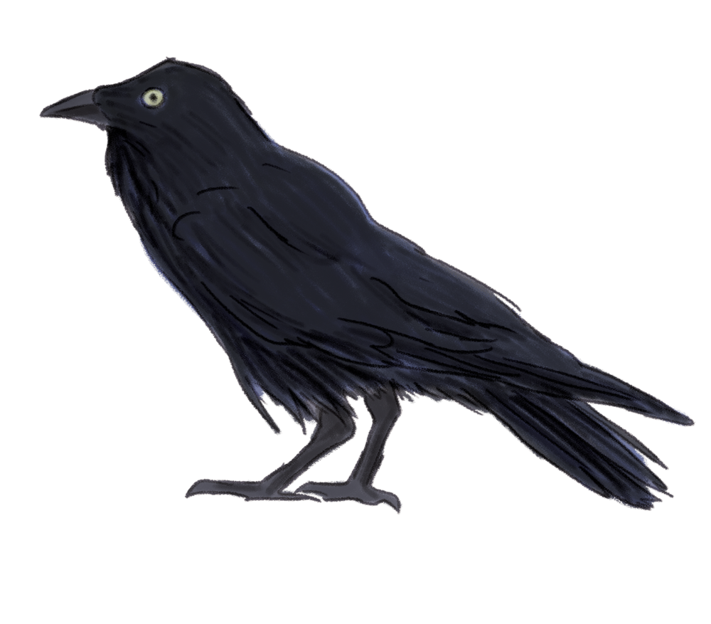 forest-raven.png
